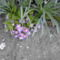 Napról-napra újabb virágok nyilnak ki