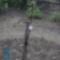 5.10. Redlove Era új szerzeményű almafa
