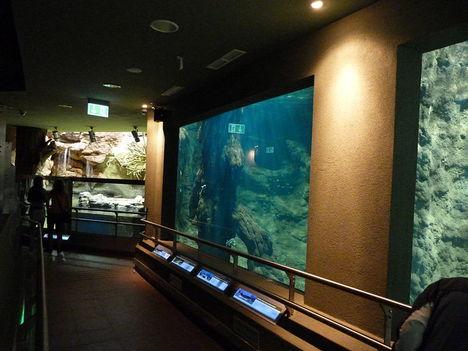 Akvárium3