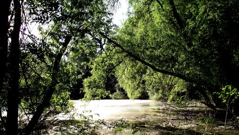 Tiszatelek-Tiszaberceli Ártér Természetvédelmi Terület