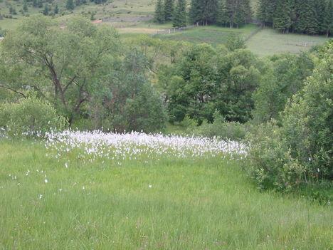 Hargita megye trmészetvédelmi területei - DOBRNEANU LÁP 4