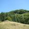 Hargita megye trmészetvédelmi területei - FIRTOS 1