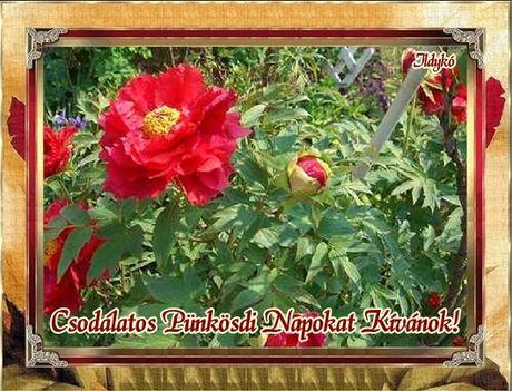 Csodálatos Pünkösdi Napokat kívánok!