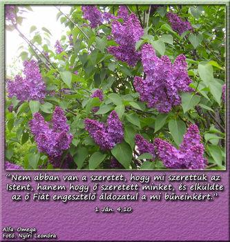1 Ján.4,10 Nem abban van a szeretet,..