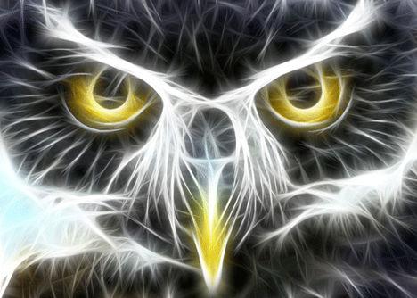 fractal-animal-wallpaper-owl