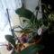 Most fakadnak az orchideáim