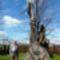 Petőfi fa