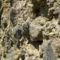 Hargita megye természetvédelmi területei-Korondi Csigadomb 4