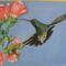 kolibri 004