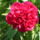 Adamecz Edina Virágai