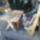 Benkó Péter: fából készített kerti dolgok