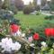 tavasz a kertemben