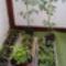2013. palánta-növendékeim