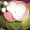harisnyaviragok,nylon flower,meia de seda 12