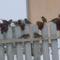 A havazás meghozta a madarakat! 4
