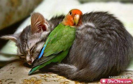 állatbarátság