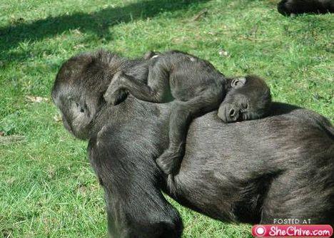 állati család 2