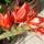 Viragaim-002_1680213_6232_t