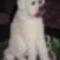 mézes-mázas kutyus, Danika szülinapjára 2013