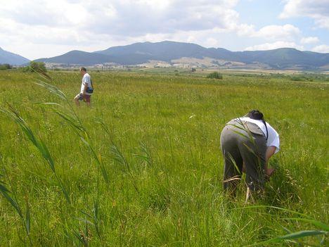 Hargita megye természetvédelmi területei - Benes rétláp 2