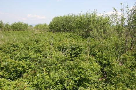 Hargita megye természetvédelmi területei - Benes rétláp 3
