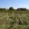 Hargita megye természetvédelmi területei - Benes rétláp 4