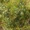 Hargita megye természetvédelmi területei - Benes rétláp 5