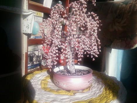 Rózsaszín fa Anyué