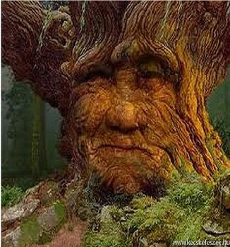 Az öreg fa halála