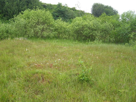 Borsáros láp - Hargita megye természetvédelmi területei