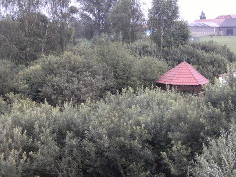 Borsáros láp -Hargita megye természetvédelmi területei 2