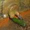 Borsáros láp -Hargita megye természetvédelmi területei 3