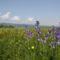 Csemő - Hargita megye természetvédelmi területei 2