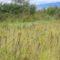 Csemő - Hargita megye természetvédelmi területei 3