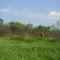 Csemő - Hargita megye természetvédelmi területei 4