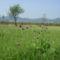 Csemő - Hargita megye természetvédelmi területei 5