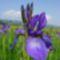 Csemo - Hargita megye természetvédelmi területei 7