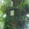 Öreg tölgyfa - Mária képpel
