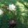 A kaktusz virága...