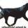 A Rottweiler Fajtastandardja -képek