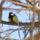 A Sokoró madarai