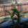 Dendrobium_1069956_5547_t