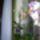 Orhidea-007_1069539_4564_t