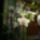 Orhidea-008_1069538_9497_t