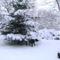 PICT0066+Az udvar a hó leple alatt
