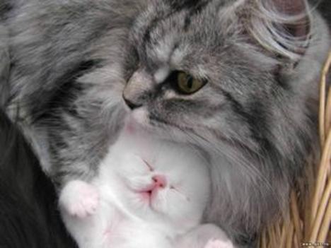 fehér kiscica