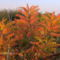 Oktober, őszi hangulat.