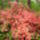 Rhododendron1_16473_344399_t