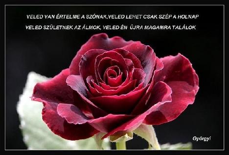 rózsa idézet