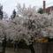 Tavasz Völcsejen